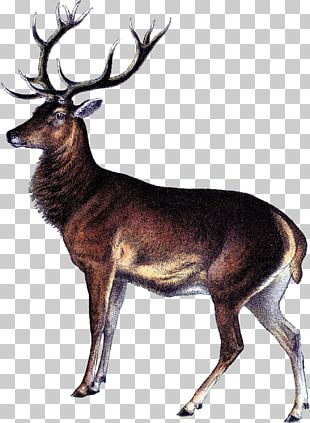 Reindeer White-tailed Deer Elk Deer Hunting PNG