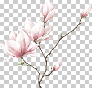 Watercolor Painting Drawing Flower PNG