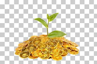 Gold Coin Plant Finance PNG
