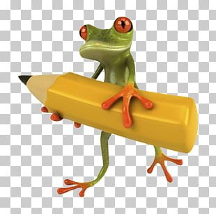 Stock Photography Frog PNG