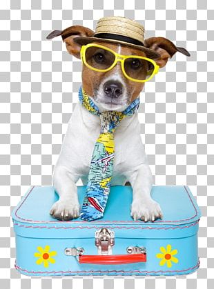 Dog Puppy Pet Sitting Travel PNG