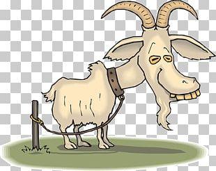 Boer Goat Sheep Cartoon Goat Farming PNG