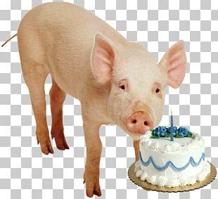 Birthday Cake Name PNG