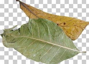 Leaf Herb Food PNG