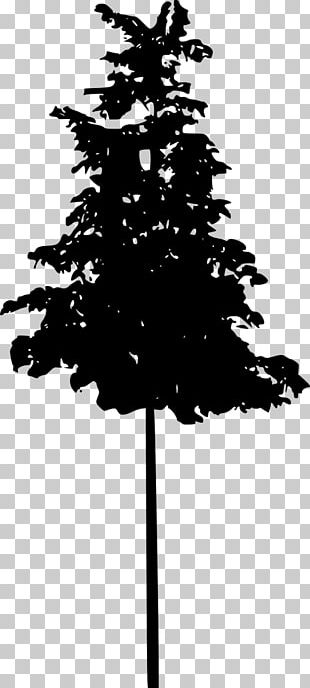 Spruce Fir Pine Silhouette Black And White PNG