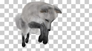 Arctic Fox Polar Bear PNG