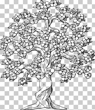 Cherry Blossom Tree Drawing PNG