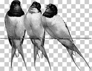 Beak Bird Feather Drawing Fauna PNG