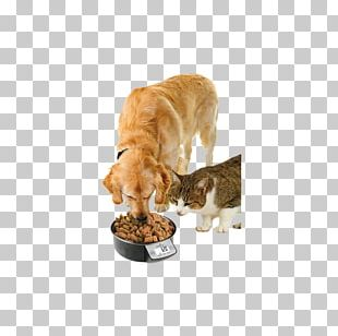Dog Puppy Cat Pet Bowl PNG