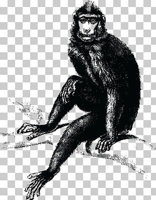 Chimpanzee Ape Primate Gorilla The Evil Monkey PNG, Clipart, Anger
