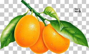 Pomelo Mandarin Orange Tangerine PNG