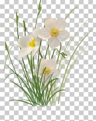 Flower Of The Fields Floral Design Oxeye Daisy Cut Flowers PNG