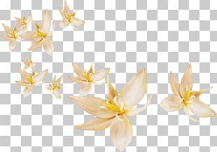 Flower Petal Leaf PNG