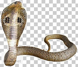 Snake Indian Cobra King Cobra PNG