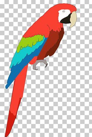 Parrot Bird Vertebrate Macaw Beak PNG
