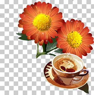 Chrysanthemum Transvaal Daisy Flower PNG