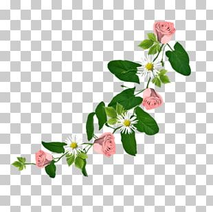 Flower Drawing Portable Network Graphics Floral Design PNG