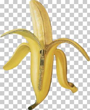 Cooking Banana Tropical Banana Information Kit Fruit PNG