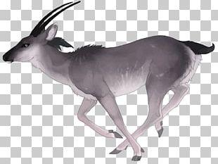 Antelope Deer Watercolor Painting PNG