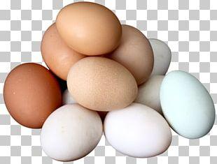 Egg Salad Deviled Egg Boiled Egg PNG