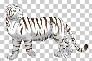 White Tiger Felidae Big Cat PNG