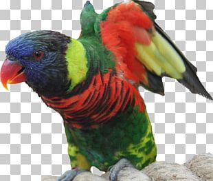 Bird Parrot Macaw Feather Animal PNG