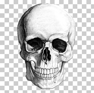 Drawing Skull Human Skeleton Art PNG