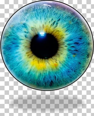 Human Eye Iris Recognition Eye Color PNG