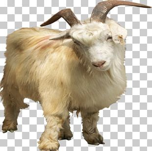 Nigerian Dwarf Goat Pygmy Goat Feral Goat PNG