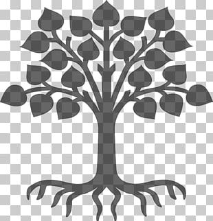 Tree Of Life Business Organization Root PNG