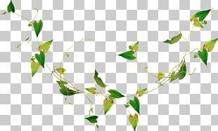 Leaf Render Desktop Nature Estethicoiff PNG