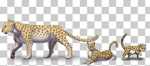 Cheetah Felidae Lion Tiger Bear PNG