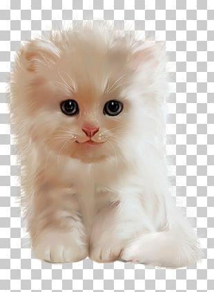 Persian Cat Asian Semi-longhair Ragamuffin Cat American Curl British Semi-longhair PNG