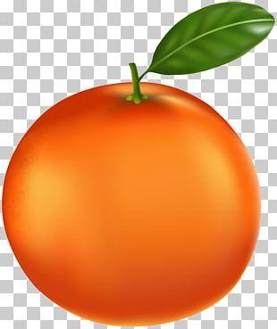 Tangerine Orange PNG