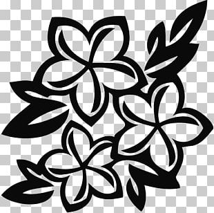 Flower White Floral Design PNG