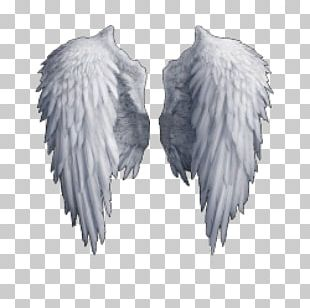 Wings Feather Angel PNG