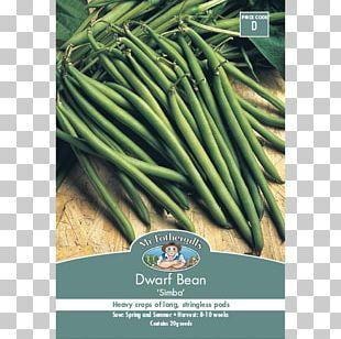 Allium Fistulosum Vegetarian Cuisine Green Bean Vegetable Welsh Cuisine PNG