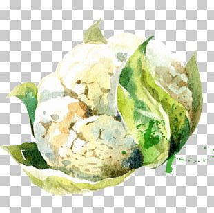 Vegetable Watercolor Painting Drawing Illustration PNG