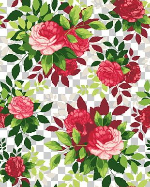 Flower Illustration PNG
