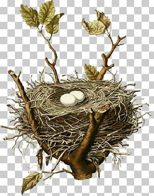Edible Bird's Nest Bird Nest House Sparrow PNG