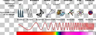 Light Electromagnetic Spectrum Electromagnetic Radiation X-ray PNG