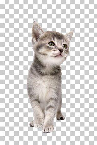 Cat CorelDRAW Dog Kitten Pet PNG