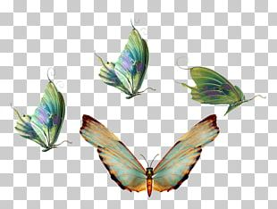 Butterfly Insect Transparency And Translucency PNG