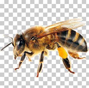 Western Honey Bee Swarming Honey Bee Life Cycle Pollinator PNG