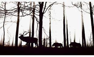 Black Forest PNG