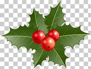 Common Holly Christmas Decoration PNG