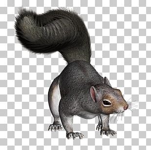 Squirrel Photography PNG