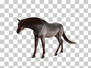 Mule Stallion Mustang Mare Colt PNG