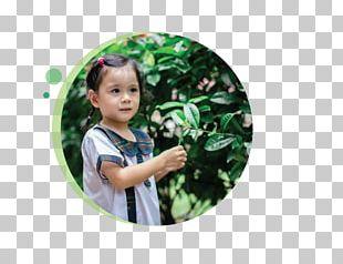 Serangoon Tampines Greenhouse Nursery School Toddler PNG