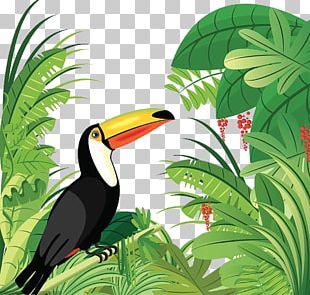 Amazon Rainforest Tropical Forest Bird Tropical Rainforest PNG